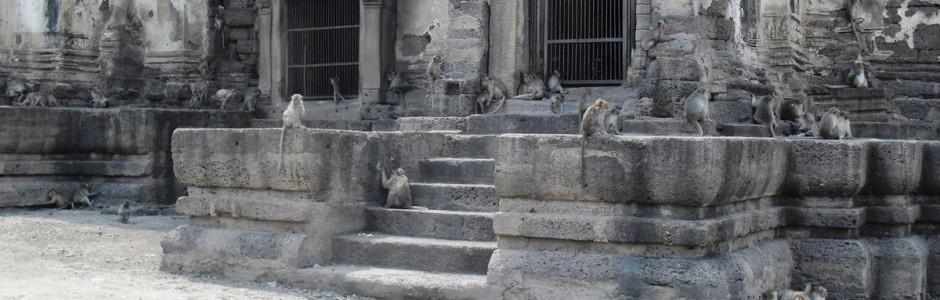 Царство обезьян