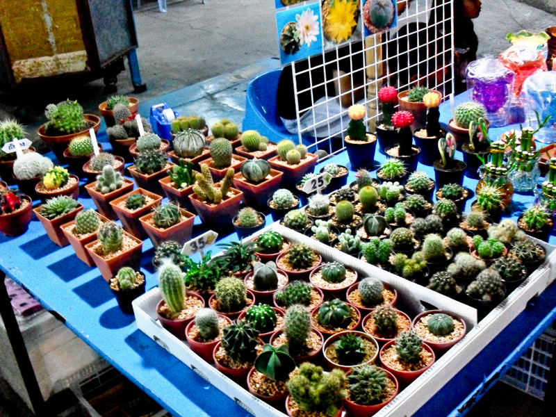 Таиланд. Ночные рынки. Кактусовое разнообразие