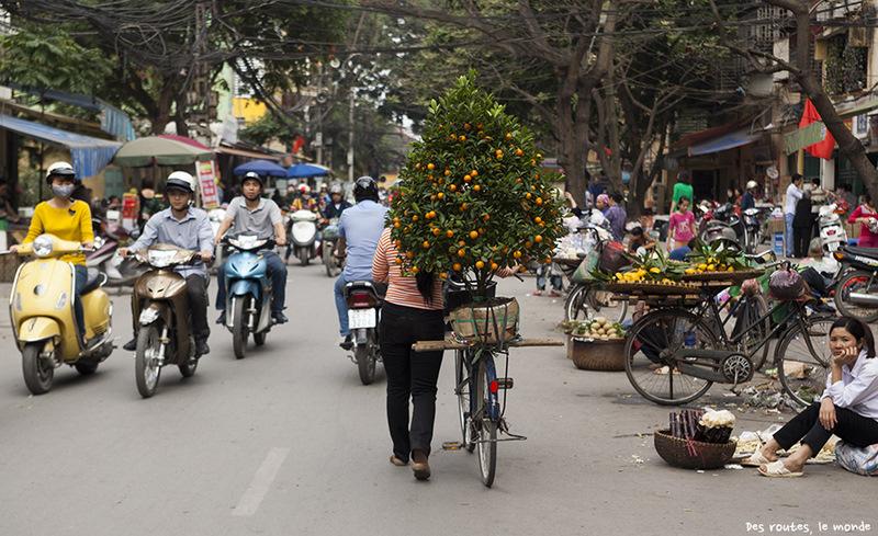 Мандариновое дерево в Ханое